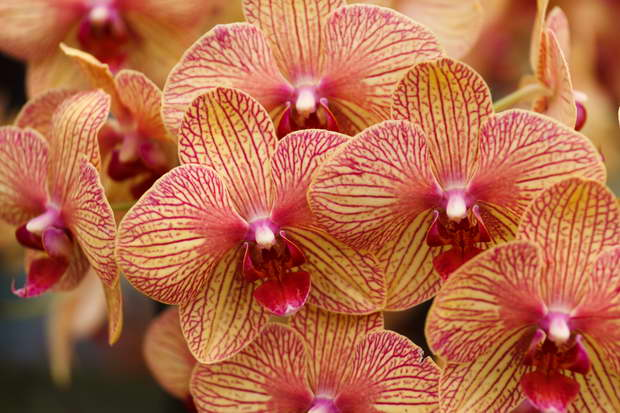 yellow and red orchid flower,yellow red flower images,beautiful orchids flowers images,colorful exotic flowers,blooming flowers,
